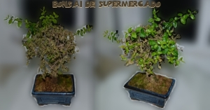 bonsai-supermercado2