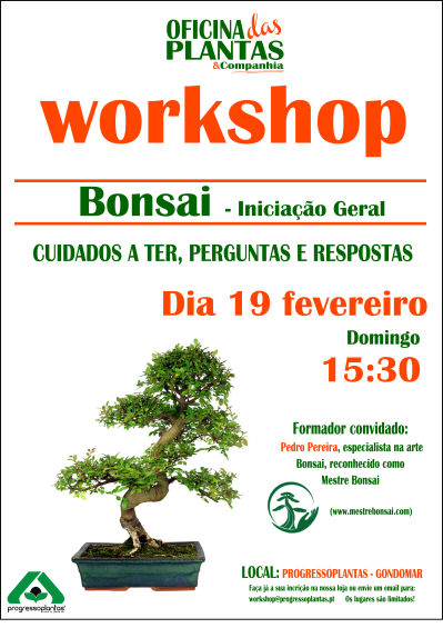 workshop-bonsai
